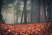 Autumn Leaves On Land In Forest
