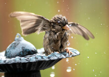 Close-up Of Bird Perching On Fountain Outdoors