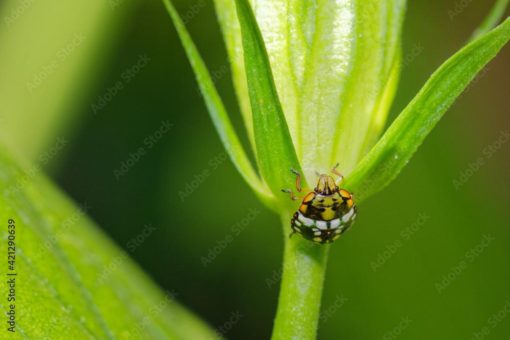 Fototapeta Owad na zielonym liściu