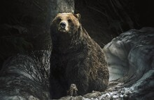Grizzly Bear In A Snowy Hollow In The Forest