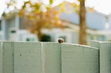 Close-up Of Snail Crawling On Wall