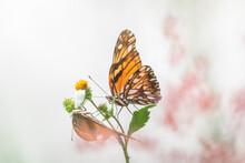 Butterflies Tango
