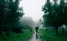 Rear View Of Person Walking On Wet Road