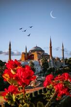 Hagia Sophia - Ayasofya Istanbul Turkey View Of Birds Flying By Building Against Sky