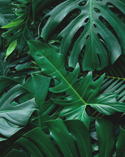 Closeup Nature View Of Tropical Leaf Background