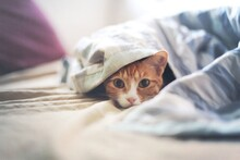 Kitten Peeking Through Blanket