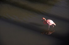 Close-up Of Pink Water In Lake