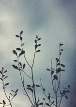 Low Angle View Silhouette Plants Growing Against Cloudy Sky