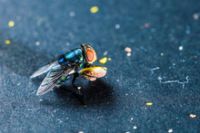 Close-up Of Blow Fly On Surface