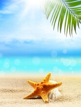 Seashells And Palm On The Sandy Beach. Summer Concept.