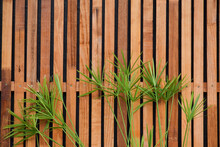 Close-up Of Plants Growing By Fence