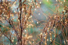 Close-up Of Bare Tree Branches