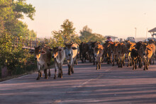 View Of Cows Standing On Road
