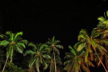 Palms And Starry Sky.