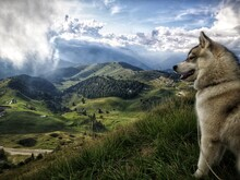 View Of A Dog On Landscape