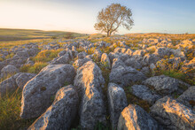 Golden Sunset Or Sunrise Light On A Lone Ash Tree (Fraxinus Excelsior) And Limestone Pavement In The Countryside Landscape Of Malham, Yorkshire Dales National Park.
