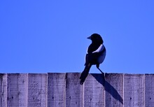 Low Angle View Of Bird Perching On Wooden Fence