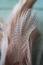 Close-up Of Feather, Softness, Fragility, Feminine, Background, Neutrals, Decoration, Macro, Pastel