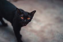 Portrait Of Black Cat