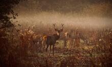 Deer Standing In Field