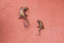 Two Metal Geckos On A Wall In Montaretto, Bonassola, La Spezia, Liguria, Italy.