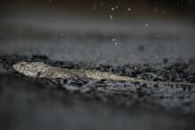 Heavy Rain Fall And Water Drop Close Up