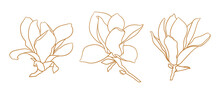 Set Of Magnolia Flowers, Thin Line Drawing On White Background. Floral Vector Sketch In Gold Color, Trendy Style. Minimalist Art. Illustration For Wedding Invitation, Greeting Card, Coloring Book.