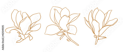 Canvas Print Set of magnolia flowers, thin line drawing on white background