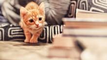 Portrait Of Kitten On Floor