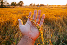 Close-up Of Hand Holding Plant On Field