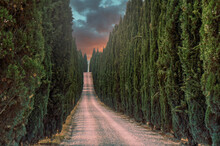 Dirt Road Amidst Cypress  Trees Against Sky