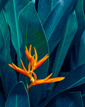 Closeup Nature View Of Green Leaf And Flower Background