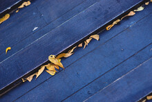 High Angle View Of Leaves On Bench