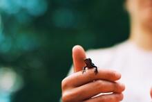 Close-up Of Salamander On Hand