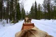 Reindeer Sleigh On Snow Covered Land