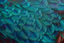 Full Frame Shot Of Parrot