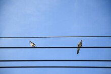 Bird On The Wires Backgruond