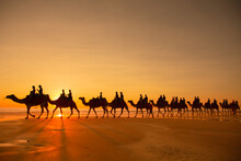 Group Of Silhouette People Riding Camels Along The Beach In Broome, Australia