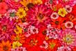 Leinwandbild Motiv Flower pattern with large group of flowers, Sammamish, Washington State