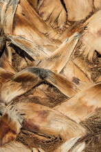 A Full Frame Photograph Of The Bark On A Palm Tree Trunk