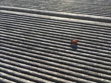 Ladybug On Wooden Floor