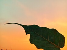 Close-up Of Autumn Leaves Against Sky During Sunset
