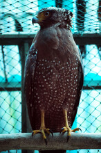 Close-up Of Eagle Perching In Cage