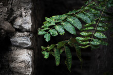 Close-up Of Fresh Green Leaves On Tree Trunk Against Wall