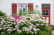 canvas print picture - Hortensienbüsche vor Hausfassade