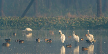 Closeup Shot Of Migratory Bird Perching On The Lake Water