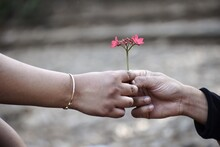 Close-up Of Woman Hand Holding Red Flowering Plant