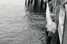 String Caught At Newport Pier