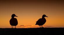 Silhouette Birds Perching On A Orange Sunset