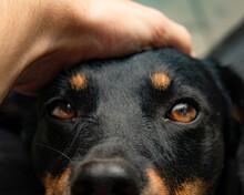Close Up Of A Cute Dog